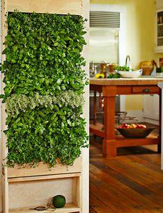Indoor vertical kitchen garden