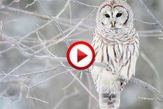 Owl grooms dog #birds, #cute, #dog, #videos, #videobox, #pinsland, https://itunes.apple.com/us/app/id508760385