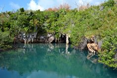Blue Hole Park – Tom Moore's Jungle, Bermuda. Hidden Gems will take you there! For more information visit our site www.islandtourcentre.com!