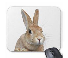 ちょい横向きのウサギの顔のマウスパッド (1匹) :フォトパッド( 世界の野生動物シリーズ ) 熱帯スタジオ http://www.amazon.co.jp/dp/B012LULMDU/ref=cm_sw_r_pi_dp_BcDTvb0J2886A