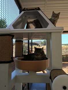 Crijo Pet Products, Inc. manufactures shelter and communal environments for cats