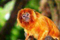 Google Image Result for http://chasem.jimnedhs.com/Rainforest-%2520CMM/images/monkey.jpg