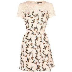 Oasis Bird lace trim skater dress (74 BAM) ❤ liked on Polyvore featuring dresses, natural, women, lace trim dress, fit flare dress, fit and flare dress, pink fit-and-flare dresses and pink dress