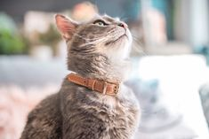Handmade leather cat collar with breakaway safaty buckle Dimensions: * Width: cm * Total lenght: 32 cm * Neck size adjustable 23 - 29 cm Leather Cat Collars, Breakaway Cat Collars, Calf Leather, Red Leather, Puppy Gifts, Unique Animals, Cats, Dog Tags, Etsy Store