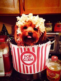 Halloween Dog Puppy Costume photos contest