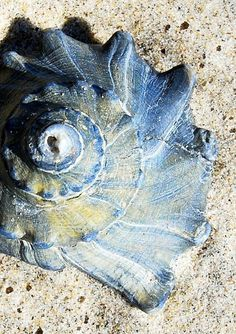 Blue shell in the sand Shell Beach, I Love The Beach, Am Meer, Ocean Life, Sea Creatures, Belle Photo, Under The Sea, Sea Shells, Seaside