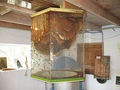Indoor bee hive design-wild    Very much doubt I'd ever consider this, but it's neat to think about all the same.