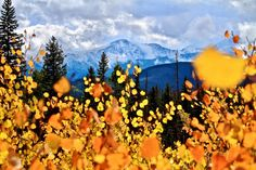 Top 10 Fall Must Dos in Winter Park - Venture Out Female Cow, Winter Park Resort, Sulphur Springs, Fraser Valley, Grand Lake, Continental Divide, Fall Drinks, Snow Mountain, Rocky Mountain National Park