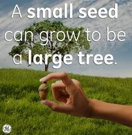 Your small acts are seeds for large change. What seeds are you planting today?