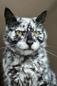 OMG -- look at this wonderful cat!