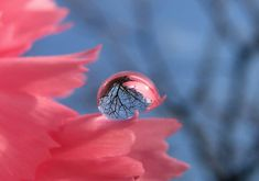 the world in a water droplet