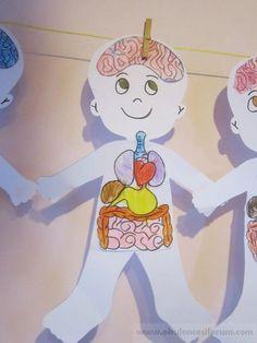 İç organlarımızı tanıyalım - Okul Öncesi Etkinlik Kaynağınız