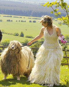 Louise Fairburn, who is an award-winning sheep breeder, decided to get married in a fleece from her own flock.    She designed the gown and took wool from her favourite rare Lincoln Longwool, Olivia.