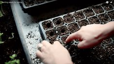 Seed starting.