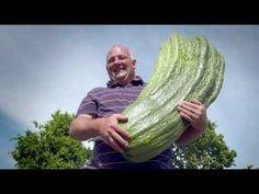 Garden Cucumber Care: Epsom Salts Recipe, Trellising, Feeding, Peppermint Spray, Diseases & Insects - YouTube