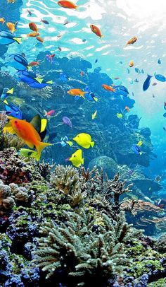 By: Lindsey Hogan Fin, Noggin- Dudeee! These aquariums are real-lifeFinding Nemo scenes- except it might be hard to find the actual Nemo. Under The Ocean, Sea And Ocean, Beautiful Sea Creatures, Ocean Wallpaper, Wale, Underwater Photos, Ocean Creatures, Natural Scenery, Ocean Photography