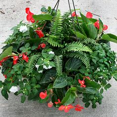 love the fern in the mix of the shade basket plants