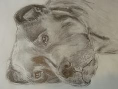 Pencil drawing of my girl Betsy. By Catherine Lane #art #pencildrawing #staffy #staffordshirebullterrier #dogs