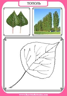 Autumn Activities For Kids, Science For Kids, Tree Study, Montessori Materials, Reggio Emilia, English Vocabulary, Botanical Art, Plant Leaves, Kindergarten