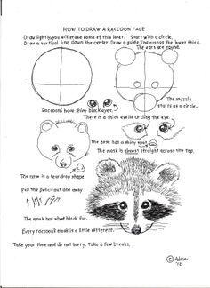 How to Draw Worksheets for Young Artist: How To Draw A Raccoon Face, Lesson and Worksheet.