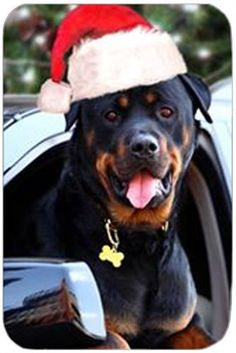 Rottweiler Large Christmas Tempered Cutting Board by Doggie of the Day, http://www.amazon.com/dp/B004LDP2V4/ref=cm_sw_r_pi_dp_ojcCqb0D6FRBN