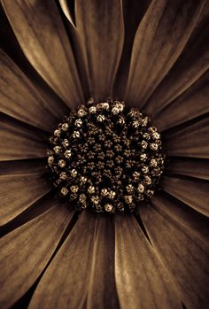 Photograph A nutella-dipped blossom to start your day by Alan Shapiro on 500px