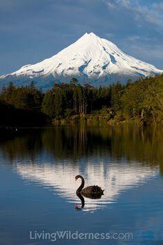 View of Mount Taranaki (Mount Egmont) from Lake Mangamahoe ~ North Island, New Zealand New Zealand Lakes, New Zealand North, New Zealand Travel, The Beautiful Country, Beautiful World, Beautiful Places, Landscape Photography, Nature Photography, Night Photography