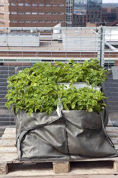 Construction bag gardening #rooftopgardening #baggardening