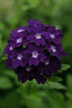 Sweet Purple Flowers