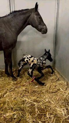 Baby Horses, Cute Horses, Beautiful Horses, Animals Beautiful, Wild Horses, Animals Of The World, Animals And Pets, Baby Animals, Cute Little Animals