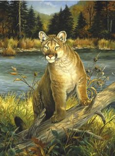 """Cougar"" painting by artist Linda Picken. Wildlife Paintings, Wildlife Art, Animal Paintings, Animal Drawings, Horse Drawings, Big Cats Art, Oil Painting Pictures, Lion Art, Mountain Lion"