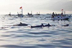 Dolphin watching in Bali, Lovina beach