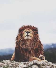 King if the wild