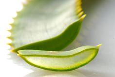 Do produkcji żelu Aloe Vera używa się wyłącznie czystego miąższu z wnętrza rośliny. Dzięki temu nie zawiera on aloiny, którą można znaleźć jedynie w zielonej, zewnętrznej skórce.