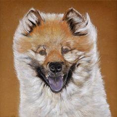 Dogportrait in pastel, Eurasier Kimbi. Done.  This painting is sold.  Eurasierportrait in Pastell, Auftragsarbeit.