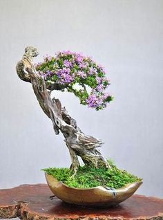Bonsai is generally a tree or plant that has actually been kept smaller sized than its typical size. The technique to making a bonsai plant is to frequently prune the tree every spring Bougainvillea Bonsai, Flowering Bonsai Tree, Bonsai Tree Types, Indoor Bonsai Tree, Bonsai Trees, Ikebana, Bonsai Artificial, Mame Bonsai, Plantas Bonsai