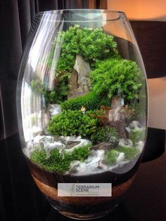 Image result for moss terrariums with fake water