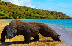 Komodo National Park in Komodo Island, Nusa Tenggara Timur