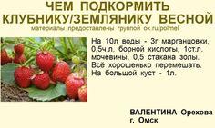 (31) Одноклассники Gardening Books, Gardening Tips, Flower Garden Plans, Sunflower Garden, Diy Gift Box, Small Farm, Green Life, Vegan Life, Garden Planning