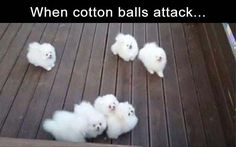 Funny Dogs Funny Animal - XD l Funny pictures videos meme gamer games quote - Cute Animal Memes, Funny Animal Photos, Animal Quotes, Cute Funny Animals, Cute Baby Animals, Funny Cute, Funny Dogs, Hilarious, Animal Funnies