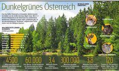 Österreichs Wälder. http://kurier.at/chronik