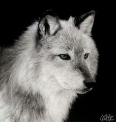 White Wolf With Purple Eyes Wolves by cat143 on Pi...