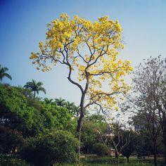 Fotografia de Bernardo Martins - http://iwasonlyjoking01.blogspot.com.br/