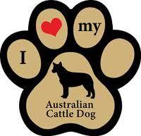 I ♥ my Australian Cattle Dog!