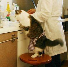 Mamãe, eu ajudo você a fazer o papa!!!