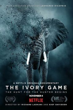 'The Ivory Game' Trailer: Leonardo DiCaprio-backed Netflix Doco Targets the Ivory Trade Hd Movies, Movies To Watch, Movies And Tv Shows, Movie Tv, Game Movie, 2016 Movies, Netflix Movies, Leonardo Dicaprio, Tv Shows