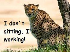 I am working