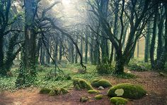 Sinatra Forest, Portugal.