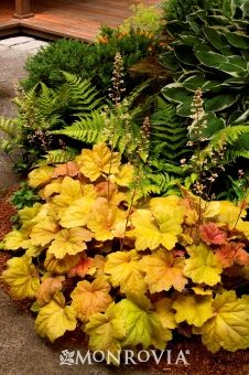 Layers, coral bells then fern then hosta