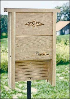 I want Bill & his dad to build me one of these next!     To many mosquitos ???? Build a bat house!!